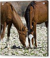 Wild Horses Grazing  Acrylic Print