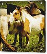 Wild Horses In California Series 14 Acrylic Print