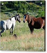 Wild Horses In Medora Acrylic Print