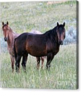 Wild Horses In The Badlands Acrylic Print