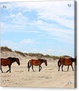 Wild Horses Of Corolla - Outer Banks Obx Acrylic Print