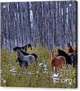 Wild Horses Of The Ghost Forest Acrylic Print
