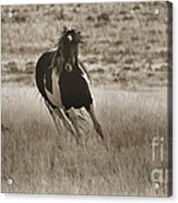 Wild Horses-sepia-signed-#7288 Acrylic Print