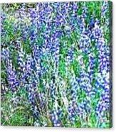 Wild In Blue Acrylic Print