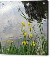 Wild Iris By The Pond Acrylic Print by Ausra Huntington nee Paulauskaite