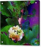 Wild Jasmine Acrylic Print