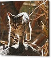 Wild Kitten Happy To Be Alive Acrylic Print