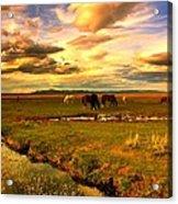 Wild Lands Of Nevada  Acrylic Print