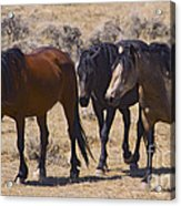 Wild Mares-signed-#0271 Acrylic Print