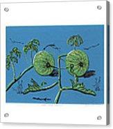 Wild Melon Acrylic Print by N Ditsheko