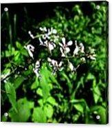Wild Missouri Flowers Acrylic Print