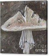 Wild Mushroom 2 Acrylic Print