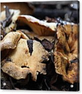 Wild Mushrooms On The Forest Floor - 5d21078 Acrylic Print by Wingsdomain Art and Photography