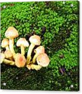 Wild Mushrooms Acrylic Print