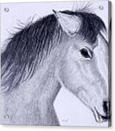 Wild Mustang Acrylic Print