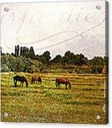 Wild Mustangs Carpe Diem Acrylic Print