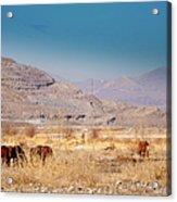 Wild Nevada Mustang Herd Acrylic Print