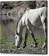 Wild On The River  Acrylic Print