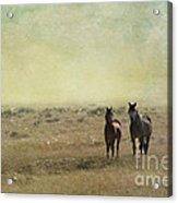 Wild Pair Acrylic Print by Juli Scalzi