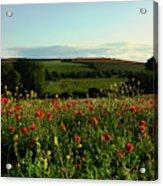 Wild Poppies Growing In A Field, Wylye Acrylic Print