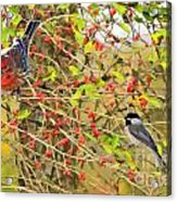 Wild Red Berrie Bush With Birds - Digital Paint Acrylic Print