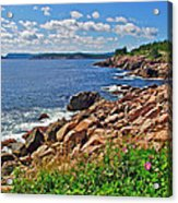 Wild Roses At Lakies Head In Cape Breton Highlands Np-ns Acrylic Print