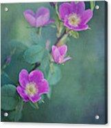 Wild Roses Acrylic Print by Priska Wettstein