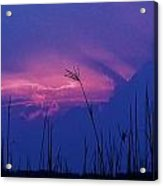Wild Sky And Grasses Acrylic Print