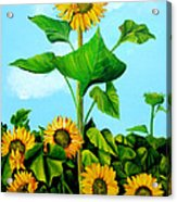Wild Sunflowers Acrylic Print