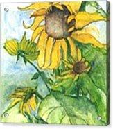 Wild Sunflowers Acrylic Print by Sherry Harradence