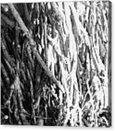 Wild Surface Roots Acrylic Print by Sandra Pena de Ortiz
