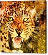 Wild Threat Acrylic Print