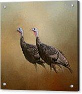 Wild Turkey At Shiloh Acrylic Print
