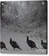 Wild Turkey Winter Acrylic Print