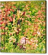 Wild Unfettered Beauty Acrylic Print