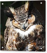Wilderness Owl Acrylic Print