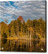 Wilderness Pond 2 Acrylic Print