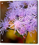 Wildflower-1 Acrylic Print