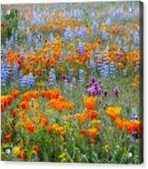 Wildflower Dreamin Acrylic Print