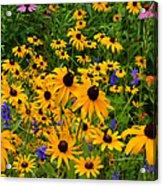 Wildflower Gold Acrylic Print