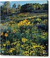 Wildflower Hillside Acrylic Print