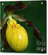 Wildflower Lady Slipper Acrylic Print