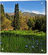 Wildflower Meadow At Descanso Gardens Acrylic Print by Lynn Bauer