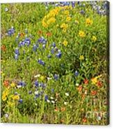 Wildflower Patch Acrylic Print