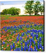 Wildflower Tapestry Acrylic Print