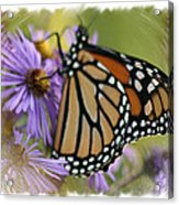 Wildflower Visitor Acrylic Print