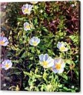 Wildflower Wandering Acrylic Print