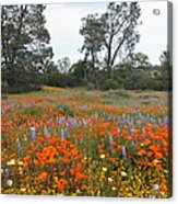 Wildflower Wonderland 2 Acrylic Print