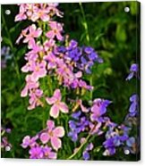 Wildflower Woods Acrylic Print