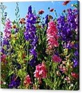 Wildflowers #14 Acrylic Print